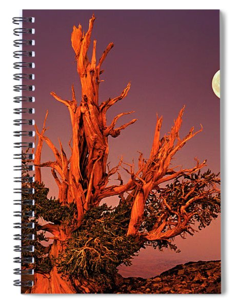 Full Moon Behind Ancient Bristlecone Pine White Mountains California Spiral Notebook
