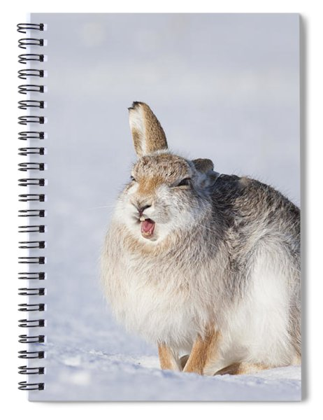 Funny Face - Mountain Hare - Scottish Highlands  #13 Spiral Notebook
