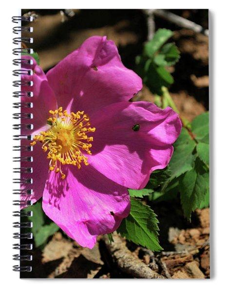 Fuschsia Mountain Accent Spiral Notebook