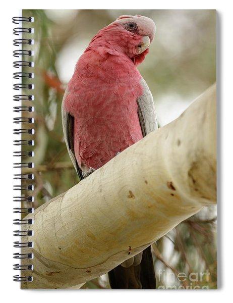 Galah 02 Spiral Notebook