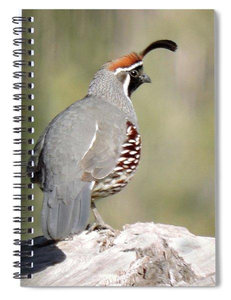 Gambel's Quail Spiral Notebook