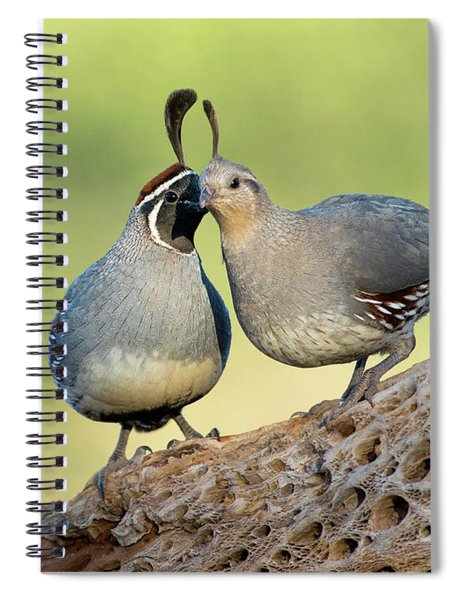 Gambels Quails In Love Spiral Notebook