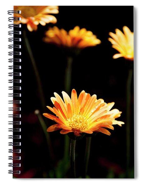 Garden Light Spiral Notebook