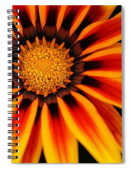 Gazania L Spiral Notebook