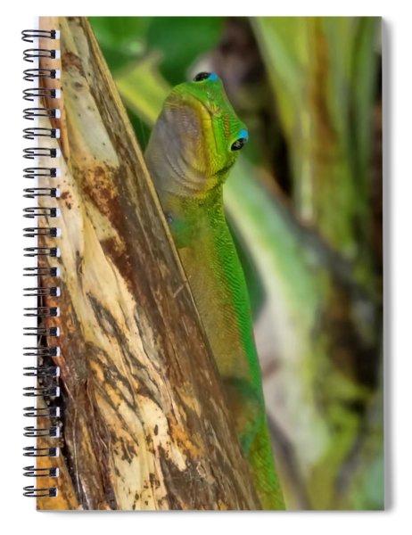 Gecko Up Close Spiral Notebook