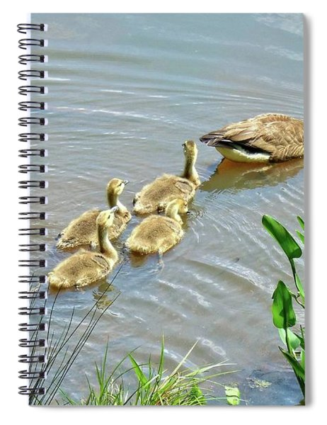 Geese And Goslings Spiral Notebook