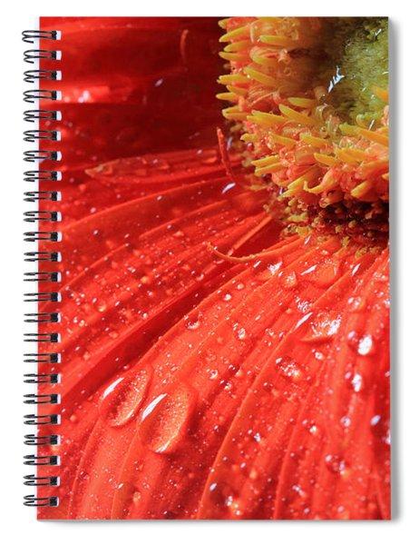 Gerbera Daisy After The Rain Spiral Notebook