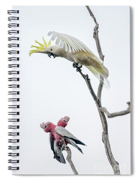 Get Off My Perch Spiral Notebook