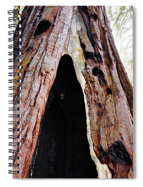 Giant Forest Giant Sequoia Spiral Notebook