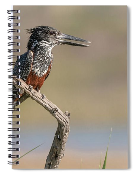 Giant Kingfisher Spiral Notebook