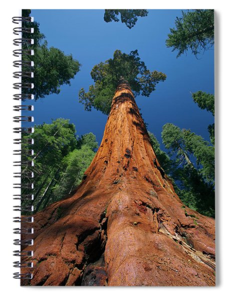 Giant Sequoia In Yosemite Spiral Notebook by Jeff Foott