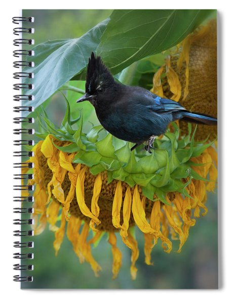 Giant Sunflower With Jay Spiral Notebook