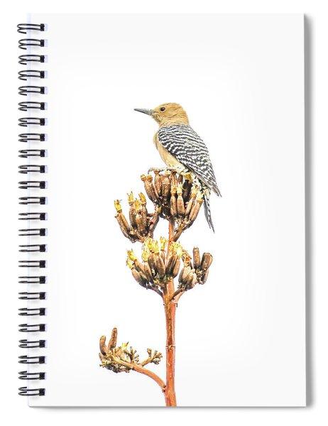 Gila Woodpecker Spiral Notebook