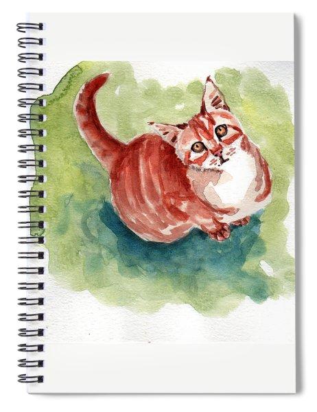 Ginger Tabby 8 Spiral Notebook