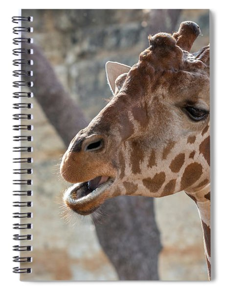 Girafe Head About To Grab Food Spiral Notebook