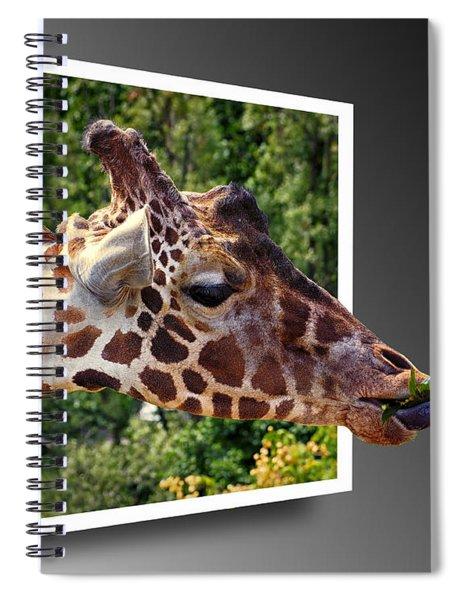 Giraffe Feeding Out Of Frame Spiral Notebook