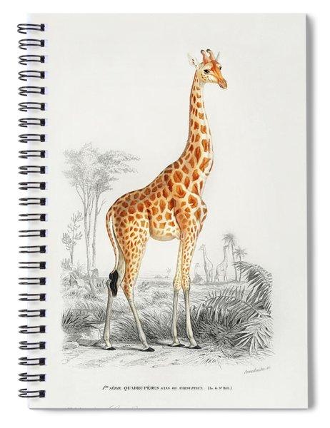 Giraffe - Giraffa Camelopardalis Spiral Notebook