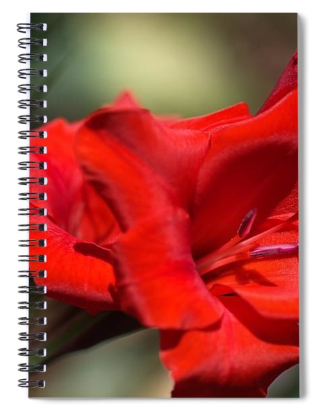 Gladioli Manhattan Variety  Spiral Notebook