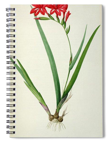 Gladiolus Cardinalis Spiral Notebook