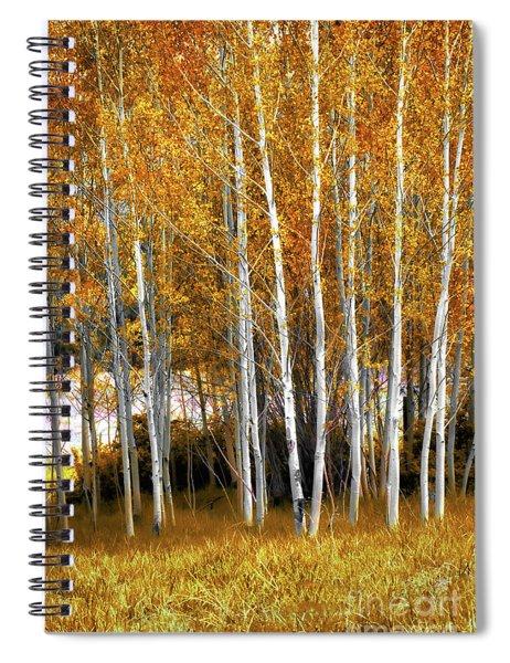 Gleaming Fall Aspens Spiral Notebook