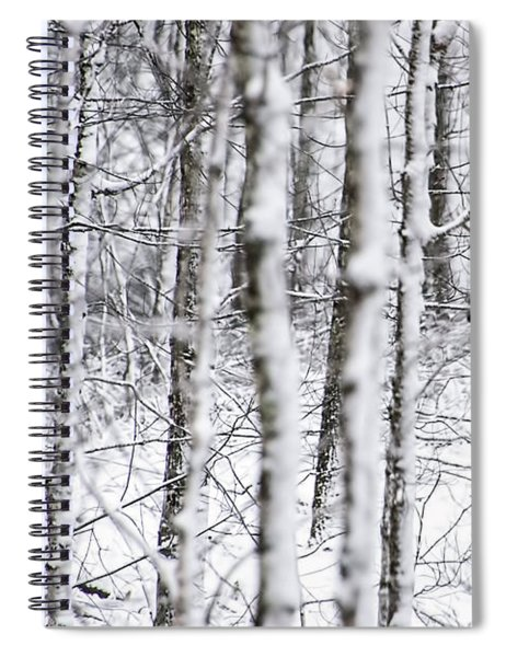Glimpse Of Bull Moose Spiral Notebook