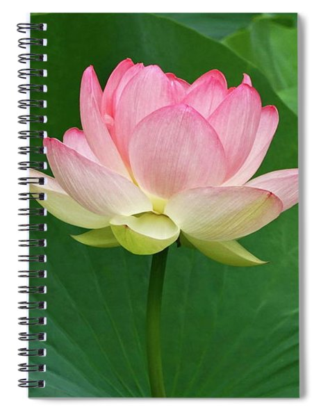 Glorious Beauty Of The Lotus Spiral Notebook