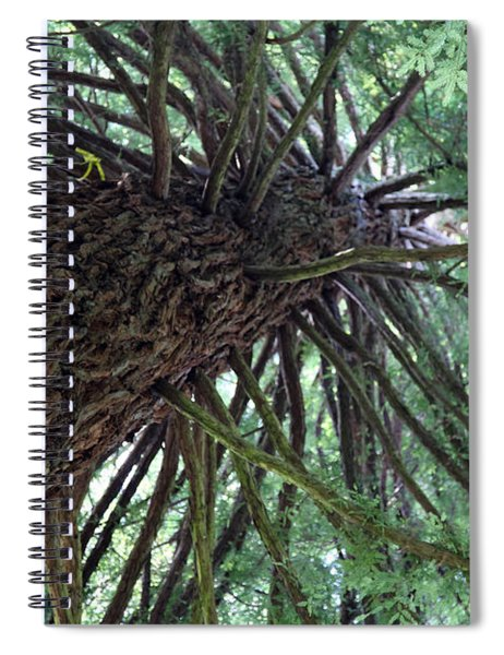 Glorious Tree  Spiral Notebook