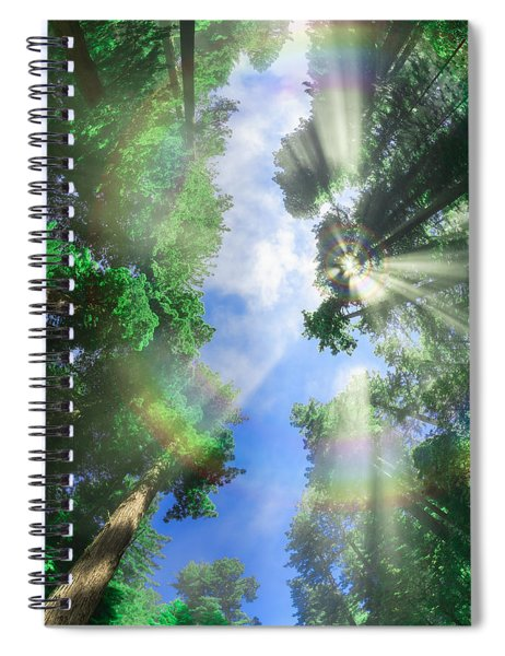 Glory Amongst Redwoods Spiral Notebook