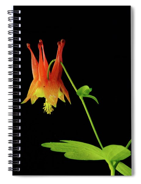 Glowing Colombine Spiral Notebook