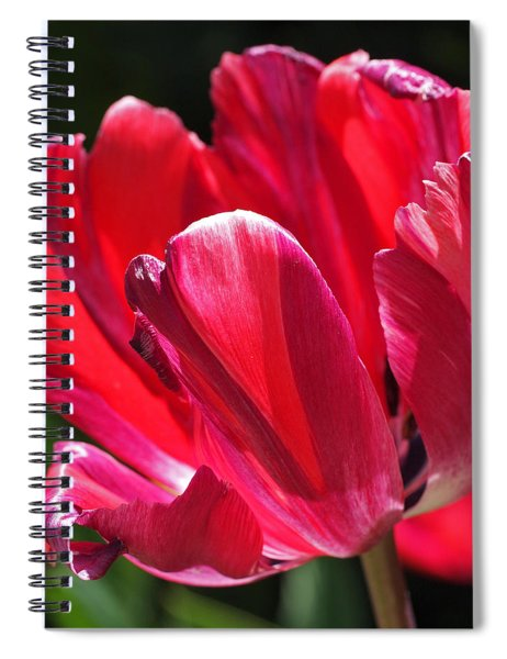 Glowing Red Tulip Spiral Notebook