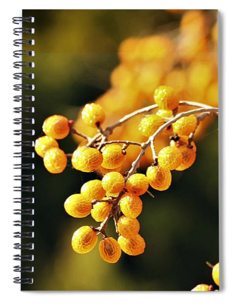Gold Chinaberries And Bokeh Spiral Notebook
