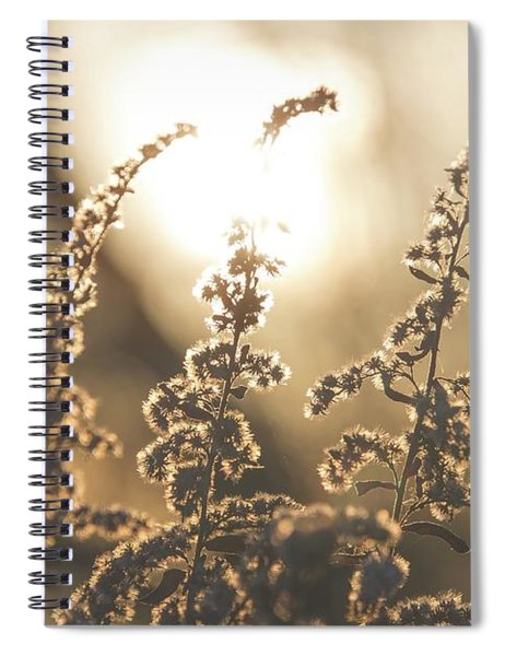 Gold Spiral Notebook