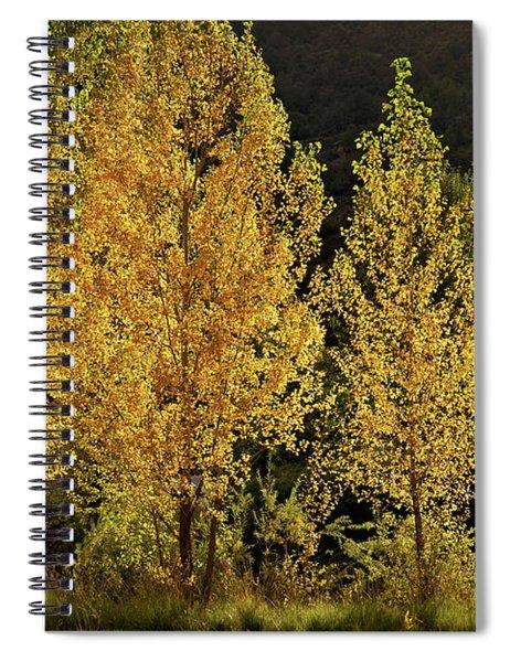 Golden Aspens Spiral Notebook