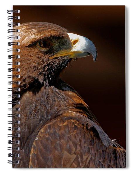 Golden Eagle In The Summer Sun Spiral Notebook