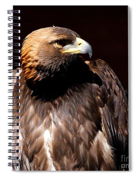 Golden Eagle - Intense Spiral Notebook
