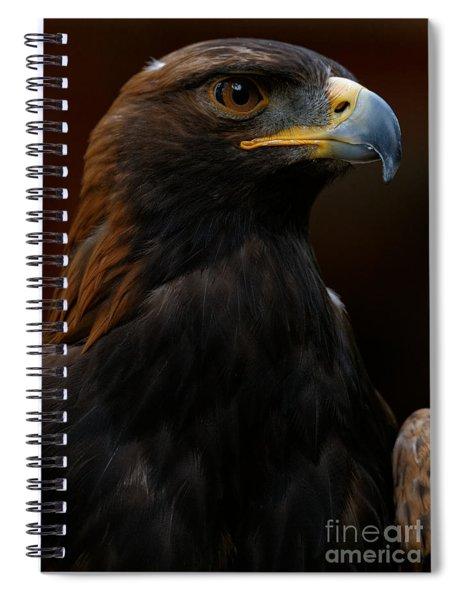 Golden Eagle - Predator Spiral Notebook