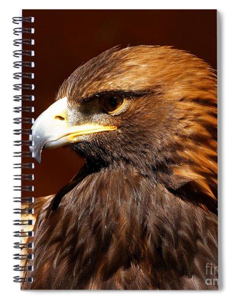 Golden Eagle - Raptor Spiral Notebook