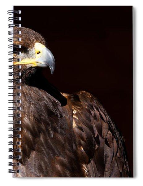 Golden Eagle - Stunning Portrait Spiral Notebook