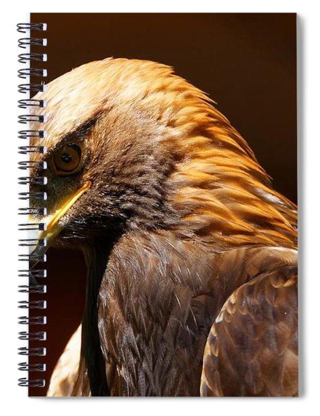 Golden Eagle - The Thinker Spiral Notebook
