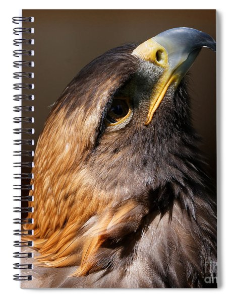 Golden Eagle Upwards Spiral Notebook