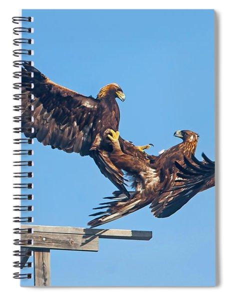 Golden Eagle Courtship Spiral Notebook
