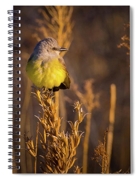 Spiral Notebook featuring the photograph Golden Hour Flycatcher by John De Bord