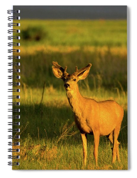 Spiral Notebook featuring the photograph Golden Light Buck II by John De Bord