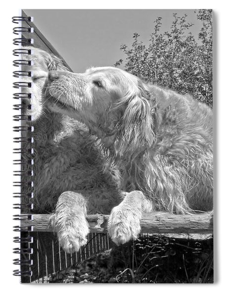Golden Retrievers The Kiss Black And White Spiral Notebook