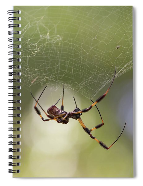 Golden-silk Spider Spiral Notebook