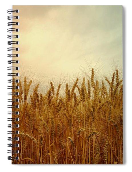 Golden Wheat Spiral Notebook