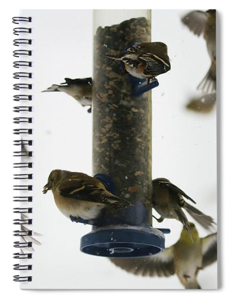 Goldfinch Frenzy Spiral Notebook