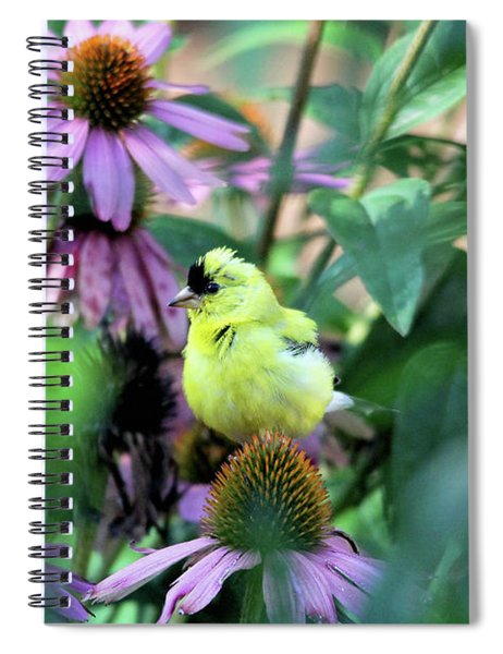 Goldfinch On Coneflowers Spiral Notebook