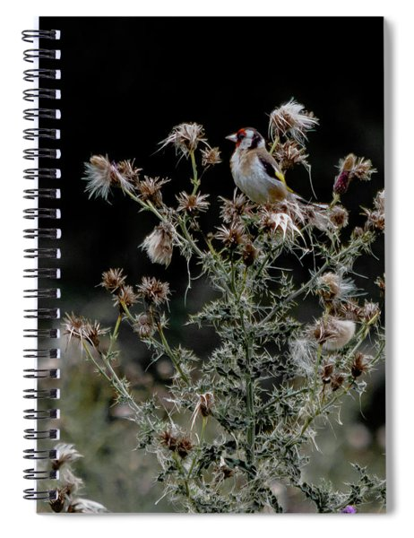 Goldfinch Sitting On A Thistle Spiral Notebook