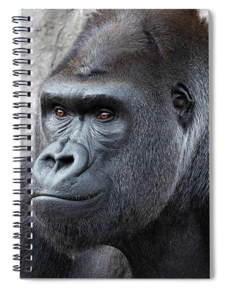 Spiral Notebook featuring the photograph Gorillas In The Mist by Robert Bellomy